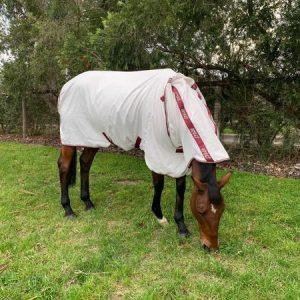 Amigo-Aussie-Allrounder-Cotton-Rug