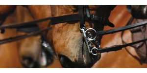 BRIDLE WEAR